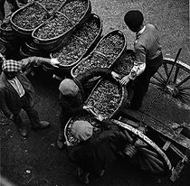 Grape-pickers unloading baskets at the grower's. Photograph by Janine Niepce (1921-2007). © Janine Niepce/Roger-Viollet