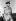 Guerre 1939-1945. Lord Louis Mountbatten, amiral britannique (commandant en chef des forces alliées du Sud-Est asiatique) sur le front d'Arakan (Birmanie), en mars 1944.   © Roger-Viollet
