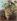 """Gustave Courbet (1819-1877). """"Grappe de raisins"""". Huile sur toile, 1871. Musée des Beaux-Arts de la Ville de Paris, Petit Palais. © Petit Palais/Roger-Viollet"""