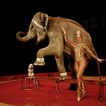 Médrano circus. Yvonne Kludsky, circus artist, with Dumba the elephant and the white poodle. 1991. © Kathleen Blumenfeld/Roger-Viollet