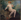 """Alfred Roll (1846-1919). """"Femme au chien"""". Huile sur toile. 1909. Musée des Beaux-Arts de la Ville de Paris, Petit Palais. © Stéphane Piera / Petit Palais / Roger-Viollet"""
