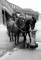 Drinking trough for horses. Paris, around 1900. © Albert Harlingue/Roger-Viollet
