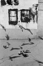 Pigeons in the district of Belleville. Paris (XXth arrondissement), circa 1966. Photograph by Léon Claude Vénézia (1941-2013). © Léon Claude Vénézia/Roger-Viollet