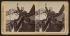 Theodore Roosevelt (1858-1919), homme d'Etat américain, prononçant un discours sur le destin de la nation américaine. South Lawrence (Massachusetts, Etats-Unis), 1902. Vue stéréoscopique. © The Image Works / Roger-Viollet