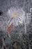 Graffiti. Paris, années 1970. Photographie de Léon Claude Vénézia (1941-2013). © Léon Claude Vénézia/Roger-Viollet