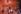 Couronnement de la reine Elisabeth II (née en 1926). Londres (Angleterre), abbaye de Westminster, 2 juin 1953. © TopFoto/Roger-Viollet