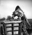Wine grower emptying his grape basket. France, 1950s.      © Laure Albin Guillot / Roger-Viollet