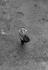 Salvador Dali (1904-1989), Spanish painter. France, 1956. © Bernard Lipnitzki / Roger-Viollet