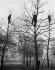 Ouvriers élaguant des arbres et réparant les dommages causés par une tempête. Londres (Angleterre), vers 1930. © Imagno/Roger-Viollet
