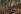 Guerre 1914-1918. Fortification allemande au Hartmannswillerkopf, sommet des Vosges méridionales. Alsace, France, 1915. Fac-similé de plaque autochrome de Hans Hildenbrand. © Bilderwelt/Roger-Viollet