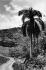 Cuba. Paysan à cheval dans la Sierra Maestra. 1960.     GLA-BFC-P19 © Gilberto Ante/BFC/Gilberto Ante/Roger-Viollet