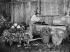 Truck farming. Wash of vegetables. Parisian suburb, on 1906. BOY-792 © Jacques Boyer / Roger-Viollet