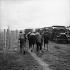 Légion étrangère en Indochine. Prisonniers Viet Minh. © Roger-Viollet