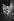 """Michel Legrand (né en 1932), compositeur et chef d'orchestre français, lors de la direction des """"Parapluies de Cherbourg"""". Paris, septembre-octobre 1979. © Jacques Cuinières / Roger-Viollet"""