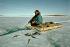 Chasseur Inuit pêchant des poissons dans une fêlure de la banquise. Territoires du Nord-Ouest du Canada. Photo : Momatiuk Eastcott. © Momatiuk Eastcott / The Image Works / Roger-Viollet