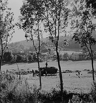 Farming. The harvest. Saint-Martin-en-Vercors (France), 1952. Photograph by Jean Marquis (1926-2019). © Jean Marquis / Roger-Viollet