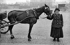 Mrs Charnier, female coach driver. Paris, circa 1900. © Neurdein/Roger-Viollet