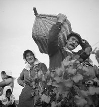 Wine growers. Grape-pickers carrying wicker baskets, in the Bourgogne region. Morey-Saint-Denis (France), 1931. Photograph by François Kollar (1904-1979). Paris, Bibliothèque Forney. © François Kollar / Bibliothèque Forney / Roger-Viollet