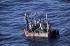 Migrants cubains à bord d'un radeau de fortune, 1994. Photographie de Tony Clark. © Tony Clark / The Image Works / Roger-Viollet