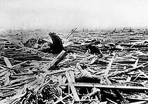 City devastated by a cyclone. Griffin (Indiana, United States), on March 18, 1925.      © Jacques Boyer/Roger-Viollet