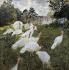 """Claude Monet (1840-1926). """"Les dindons dans le parc du château de Rottembourg, à Montgeron"""". Huile sur toile, 1877. Paris, musée d'Orsay.  © Iberfoto / Roger-Viollet"""
