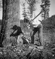 Foresters and woodcutters. The falling axe. Forest in Tronçais (France). 1931. Photograph by François Kollar (1904-1979). Paris, Bibliothèque Forney. © François Kollar / Bibliothèque Forney / Roger-Viollet