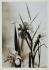 Iris de Hollande. Paris, vers 1940.  © Laure Albin Guillot / Roger-Viollet
