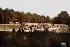 Guerre 1914-1918. Parc de camions automobiles. Ces parcs se dissimulent aux avions ennemis. Verdun, septembre 1916. Fac-similé de plaque autochrome de Jules Gervais-Courtellemont. © Bilderwelt/Roger-Viollet