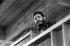 Fidel Castro (1926-2016), homme d'Etat et révolutionnaire cubain, inaugurant la cité universitaire José A. Echevarria. Cuba, vers 1960. © Gilberto Ante/Roger-Viollet