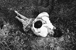 Jeune couple allongé dans l'herbe, été 1955. Photographie de Gotthard Schuh (1897-1969). © Gotthard Schuh/Fotostiftung Schweiz/KEYSTONE Suisse/Roger-Viollet