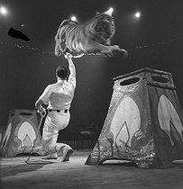 Circus : tamer and tiger. France, circa 1935. © Gaston Paris / Roger-Viollet