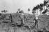 Cojimar (Cuba). Ferme d'enseignement agricole réservée aux orphelins dont les parents ont été tués en combattant dans la Sierra Maestra de 1956 à décembre 1958.  Années 1960.     GLA-060D-28 © Gilberto Ante/Roger-Viollet