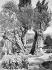Oliviers au jardin de Gethsemani. Jérusalem (Palestine), début du XXème siècle. © Jacques Boyer / Roger-Viollet
