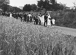 A wedding procession. Charente (France), 1965. Photograph by Janine Niepce (1921-2007). © Janine Niepce/Roger-Viollet