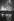 Christmas tree at Trafalgar Square. London (England), 1958. © Jean Mounicq/Roger-Viollet