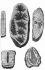 """Minéralogie : typolithes ou pierres chargées d'empreintes de végétaux et animaux. Gravure de Bénard. """"Encyclopédie"""" de Diderot (XVIIIème siècle). © Roger-Viollet"""