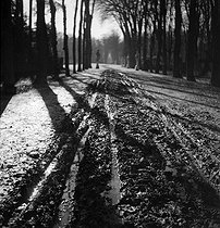 Forest landscape in France. Photograph by Gaston Paris (1903-1964). © Gaston Paris / Roger-Viollet
