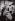 Louis Lumière (1864-1948), chimiste et industriel français, pionnier du cinéma, 1935. Photographie de Walter Limot (1902-1984). Paris, musée Carnavalet. © Walter Limot / Musée Carnavalet / Roger-Viollet