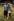 Le prince Charles (né en 1948) et son épouse, la princesse Diana (1961-1997), sur les bords du fleuve Dee. Balmoral (Ecosse), 19 août 1981. © PA Archive/Roger-Viollet