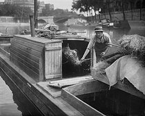Stable on a barge, sailing on the river Seine. Paris, 1908. © Jacques Boyer / Roger-Viollet