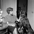 Françoise Sagan (1935-2004), femme de lettres française, vers 1965.    © Roger-Viollet