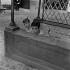 """Shooting of """"Quand la femme s'en mêle"""", film by Yves Allégret (1957), after a novel by Jean Amila (1956). Sophie Daumier and Alain Delon. France, on July 18, 1957. © Alain Adler / Roger-Viollet"""