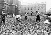 World War II. Planting leeks in the Louvre gardens for the Secours National (Vichy France official charity). Paris, September 1943. © LAPI/Roger-Viollet