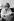 Françoise Sagan (1935-2004), femme de lettres française, chez elle, vers 1965. © Jacques Cuinières / Roger-Viollet
