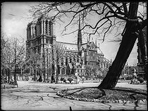 View of the Notre-Dame de Paris Cathedral from the quai de Montebello. Paris (Vth arrondissement), 1920-1950. Photograph from the Parisian department of roads and transports. Bibliothèque historique de la Ville de Paris. © BHVP / Roger-Viollet