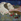 """Gustav Klimt (1862-1918). """"Ria Munk sur son lit de mort"""". Huile sur toile, 1912. © TopFoto/Roger-Viollet"""