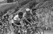 "Tour de France 1976. Bernard Thévenet (born in 1948) and Raymond Poulidor (1936-2019), French racing cyclists, during the 9th stage from Divonne-les-Bains to L'Alpe d'Huez (France), on July 4, 1976. Photograph by Bernard Charlet, from the collections of the French newspaper ""France-Soir"". Bibliothèque historique de la Ville de Paris. © Bernard Charlet / BHVP / Roger-Viollet"