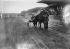 Grand Prix d'Amérique. Le cheval De Soto passe le poteau d'arrivée. Vincennes, janvier 1939. © LAPI / Roger-Viollet