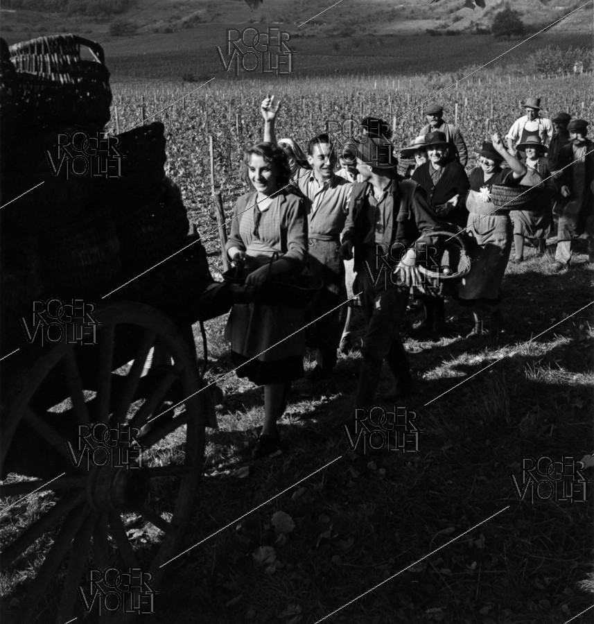 Roger-Viollet | 968608 | A happy escort follows the last cart during grape harvest. Photograph by Janine Niepce (1921-2007). | © Janine Niepce / Roger-Viollet