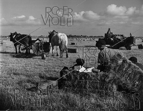 Roger-Viollet | 721887 | Break in a harvested field. Charente-Maritine. 1958. Photograph by Janine Niepce (1921-2007). | © Janine Niepce / Roger-Viollet
